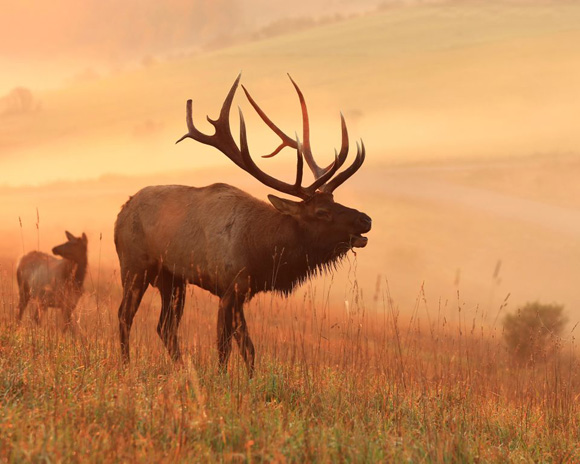 Scary Elk Animation WIP by DracoFlameus on DeviantArt