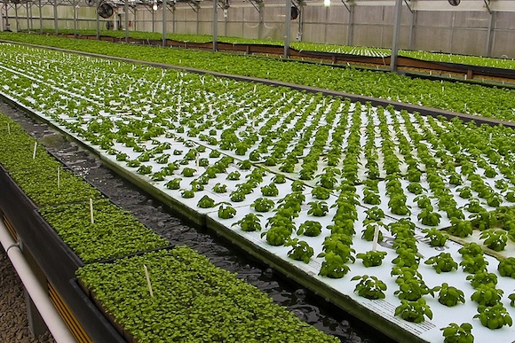 Aquaponics at Herban Farms