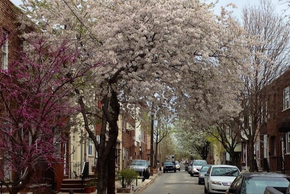 Mountain Street, one of South Philly's many charming blocks