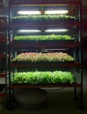Vertical farming in East Benton