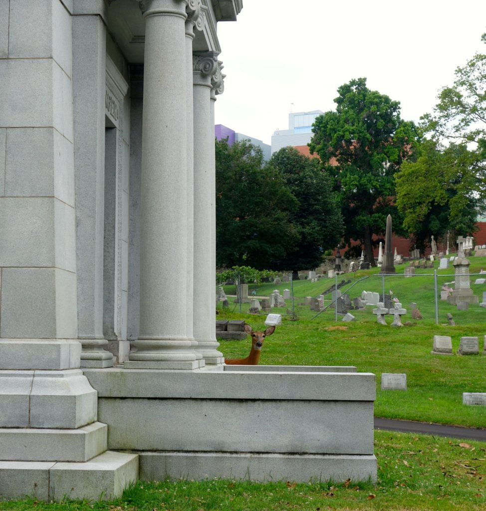Sharing the quiet in Allegheny Cemetery