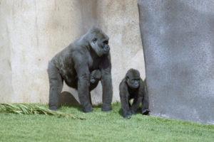 Credit: San DIego Zoo Global
