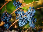 Winery_FP4