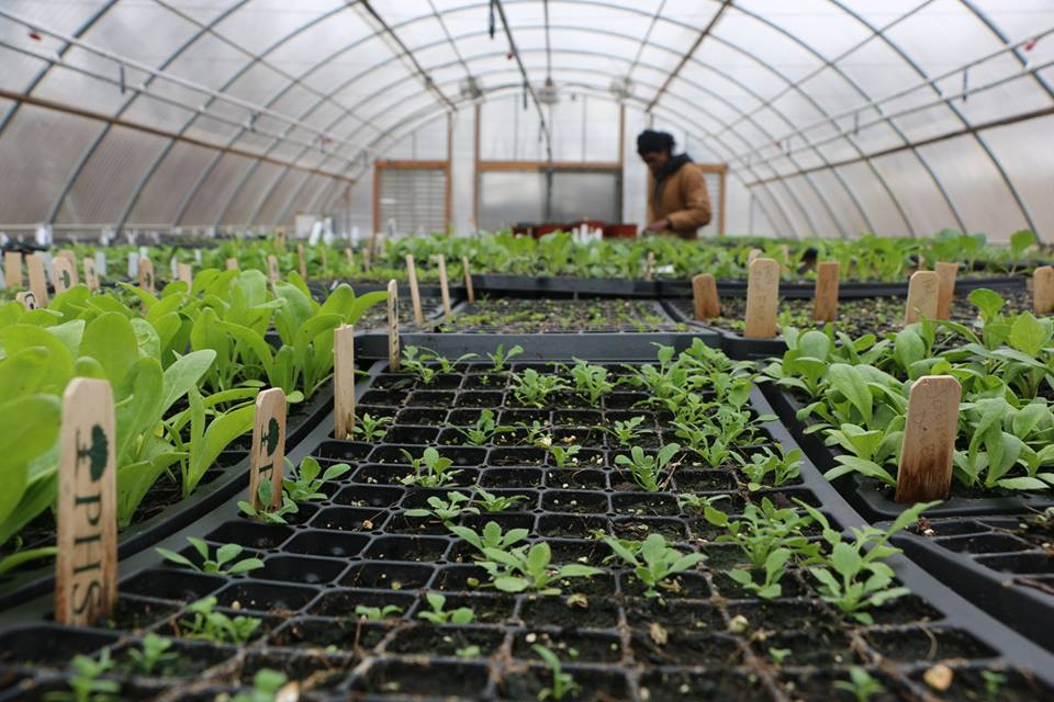 seedlings in greenhouse (1)